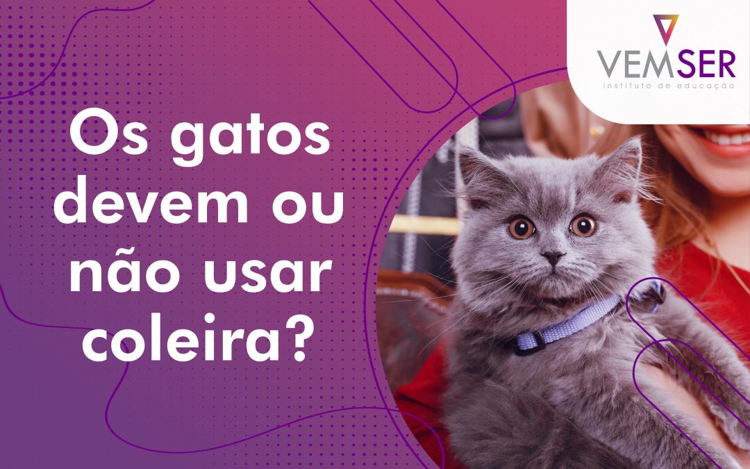 Os gatos devem ou não usar coleira?