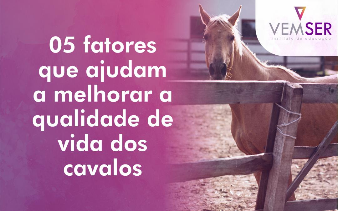 05 fatores que ajudam a melhorar a qualidade de vida dos cavalos